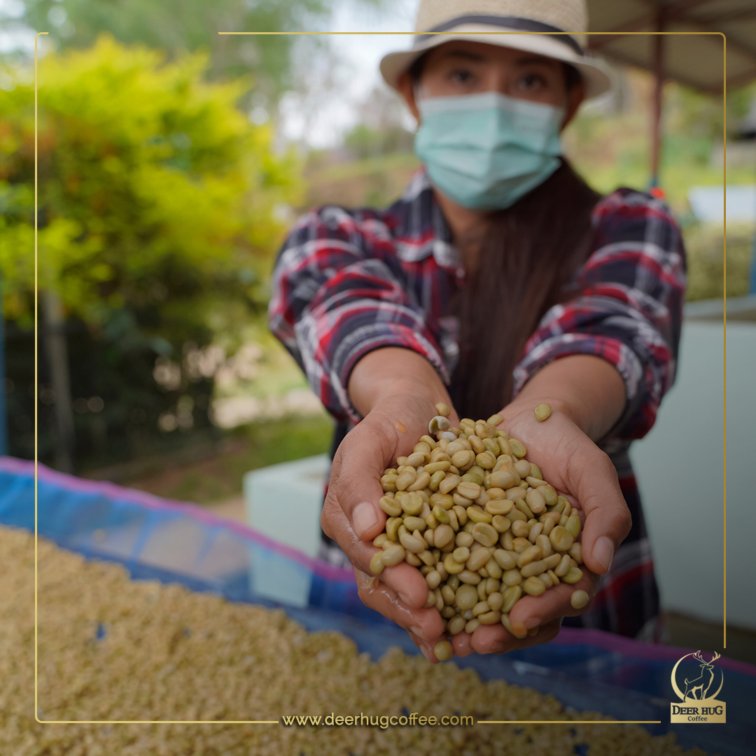 What is a washed process coffee?
