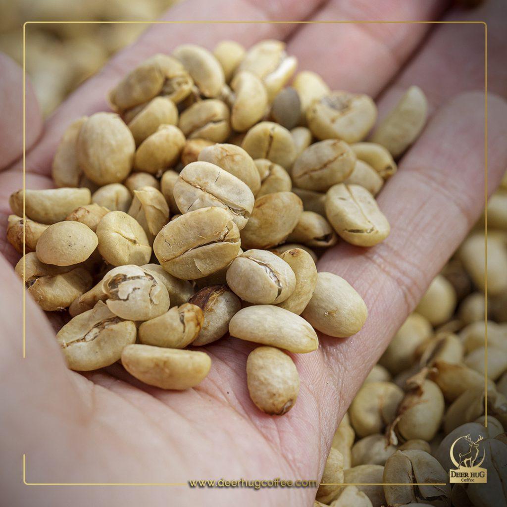La calidad del café